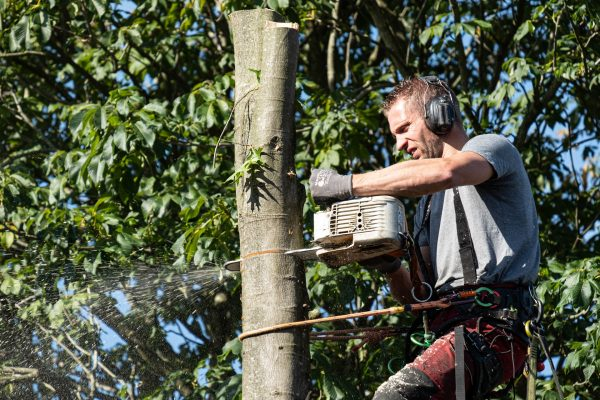 European Tree Worker Hengelo