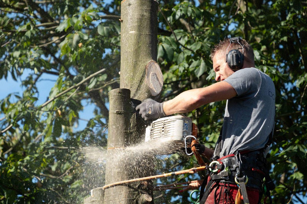 ETW bomen kappen
