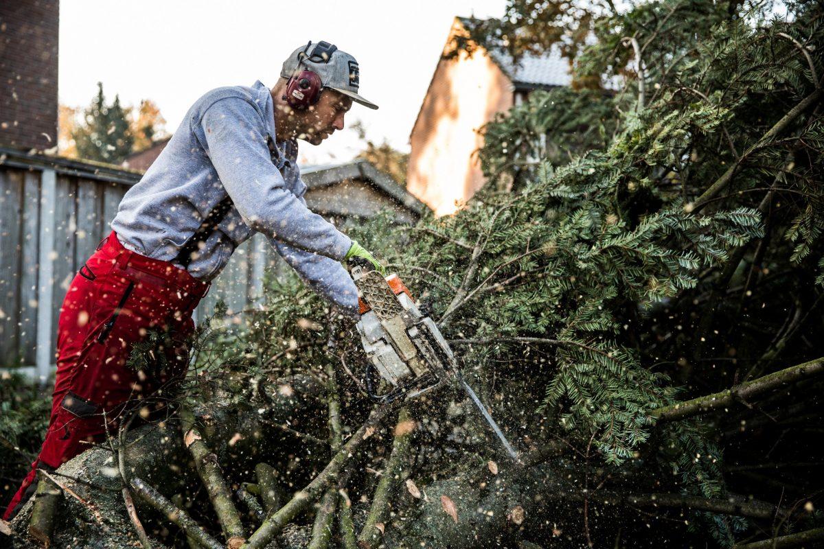 Bomen verwijderen Twente