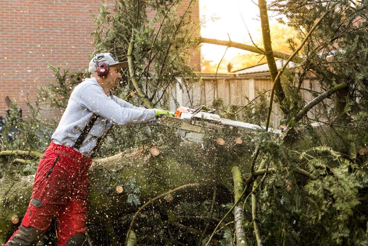 Bomen rooien Twente