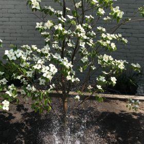 Tuinonderhoud beplanting